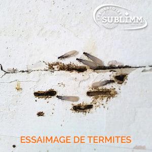Détection de termites - Essaimage