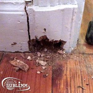 Dégâts de termites sur une plinthe